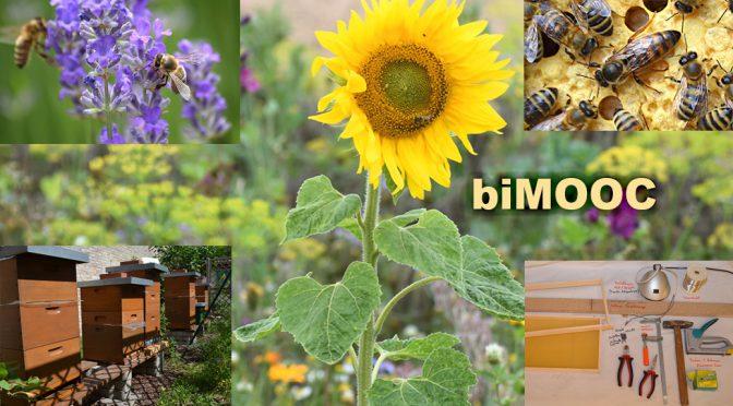 Bienen & Imkerei Aus- und Weiterbildung (OER)